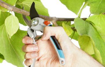 Kéo cắt tỉa cây cảnh Gardena 08906-20- Nhập khẩu Đức